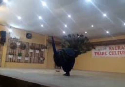 Peacock-Dance-Mayoor-Nach